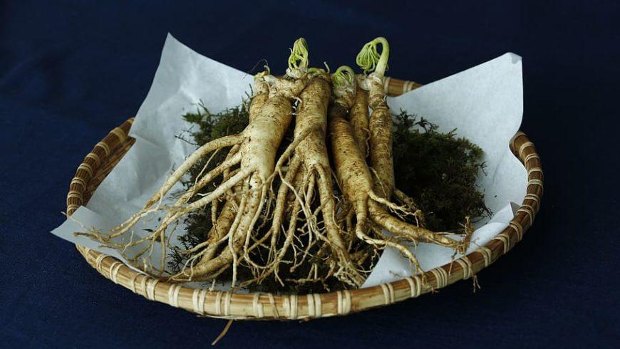Ginseng: propiedades medicinales y beneficios